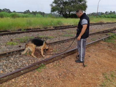 Cães do canil da Guarda Civil participam de treinamento