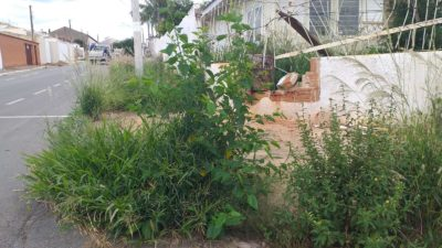 Casas e calçadas no Jardim Maringá estão tomadas por matagal