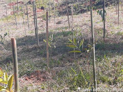 Prefeitura cumpre compromisso ambiental e realiza o plantio de 3.500 mudas