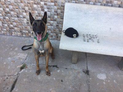 Cadela Zara da GCM localiza drogas na Vila São Francisco