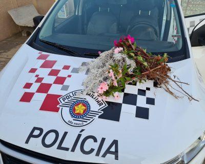 Mulher é surpreendida e presa furtando flores no trevo de Nova Campina