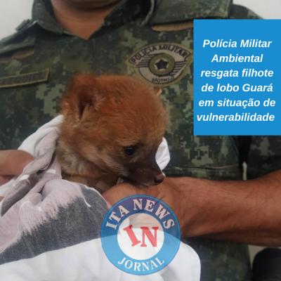 Polícia Militar Ambiental resgata filhote de lobo Guará em situação de vulnerabilidade